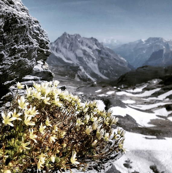 Stunning views of the Alps